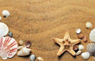 seashells on sand | Professional Care Home Advice