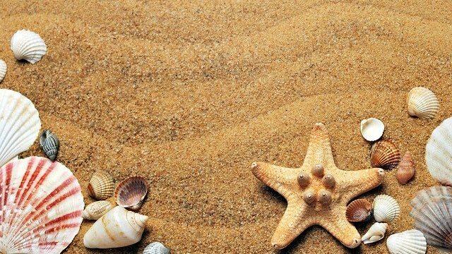 seashells on sand   Professional Care Home Advice