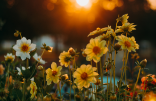 Flowers outdoors | Guidance on Care Homes